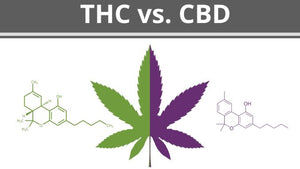 CBD and THC. Whats the difference?