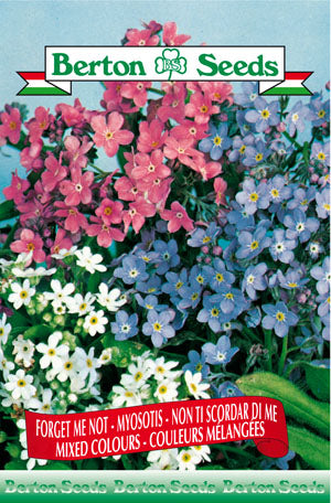 Berton Seeds Forget-Me-Not Mixed Colours