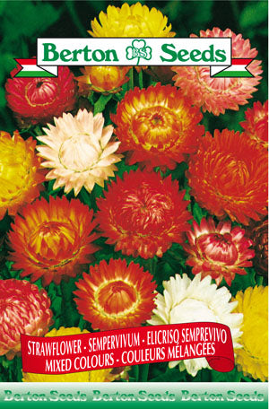 Berton Seeds Strawflower Mixed Colours