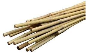 "Bamboo Stakes 72"" 6 pack"