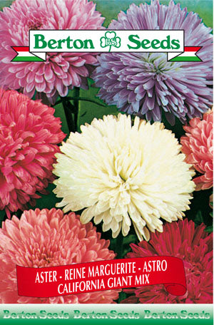 Berton Seeds Aster California Giant Mix