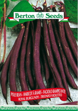 Pole bean royal burgundy