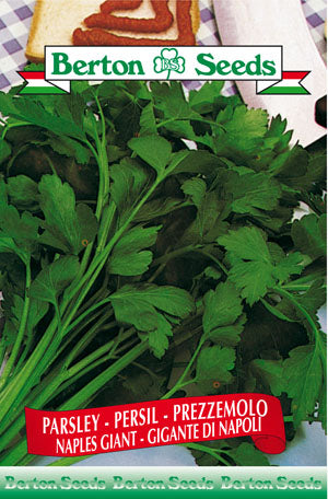 Berton Seeds Parsley - Naples Giant