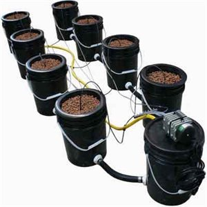 10 Bucket Deep Water Culture System