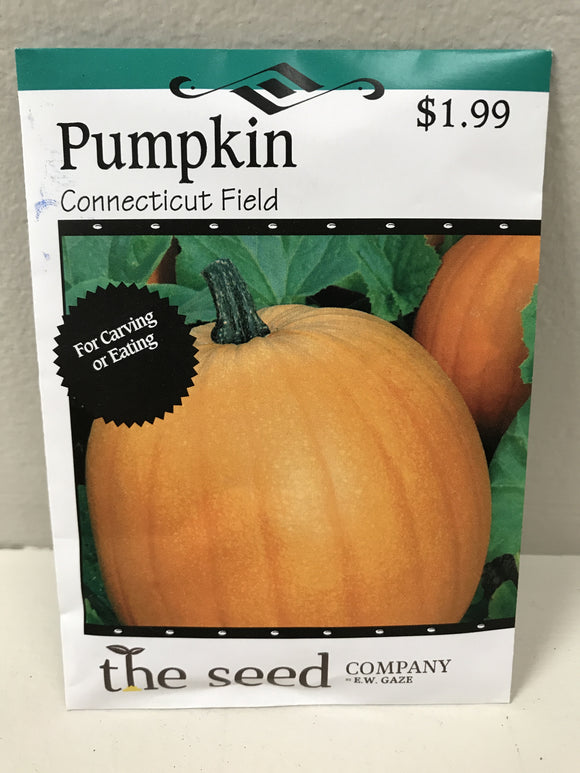 PUMPKIN CONNECTICUT FIELD SEEDS