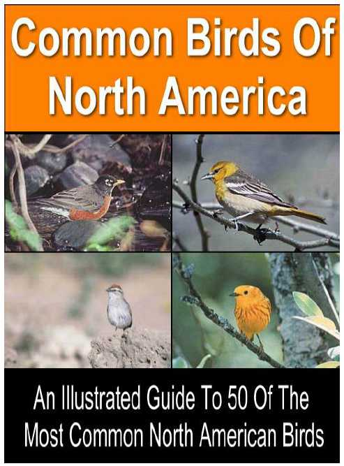 Illustrated Guide To 50 Of The Most Common North American Birds - PDF file - Instant Download Only 1.95 USD