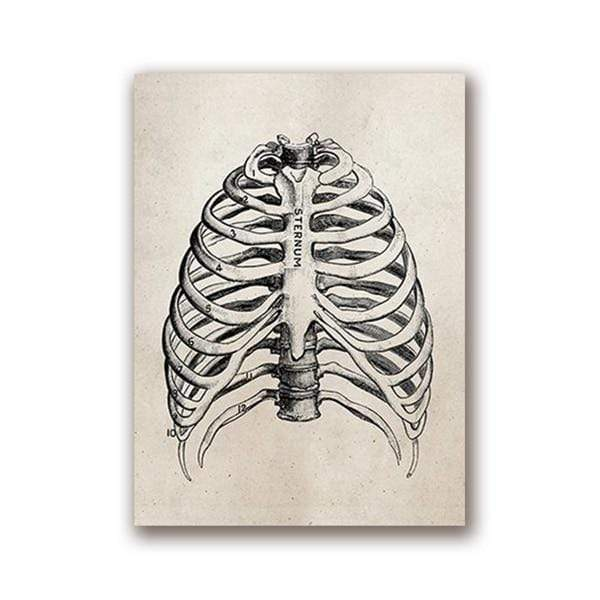 Human Anatomy Vintage Science Posters 20x25 cm / Chest Print