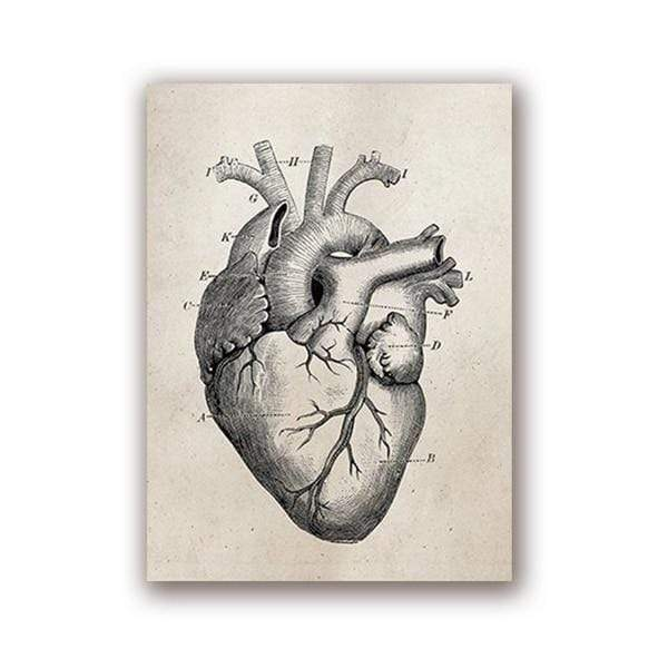 Human Anatomy Vintage Science Posters 20x25 cm / Heart Print