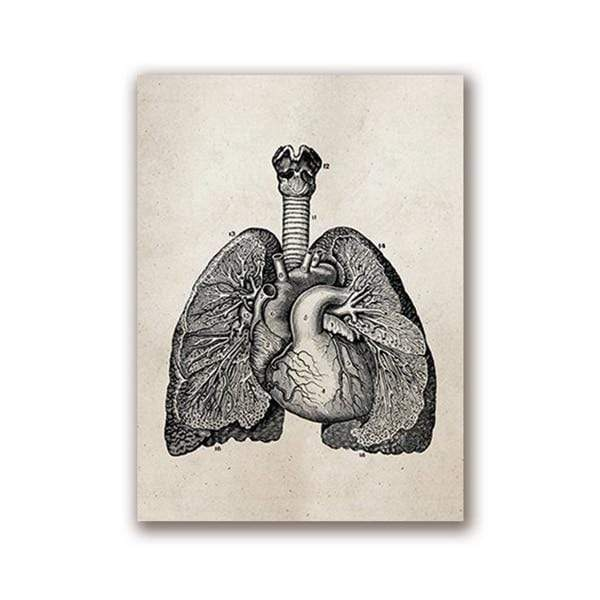 Human Anatomy Vintage Science Posters 20x25 cm / Lung Print
