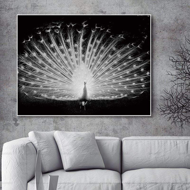 Majestic White Peacock in Black Background HD Printed on Canvas Poster Canvas