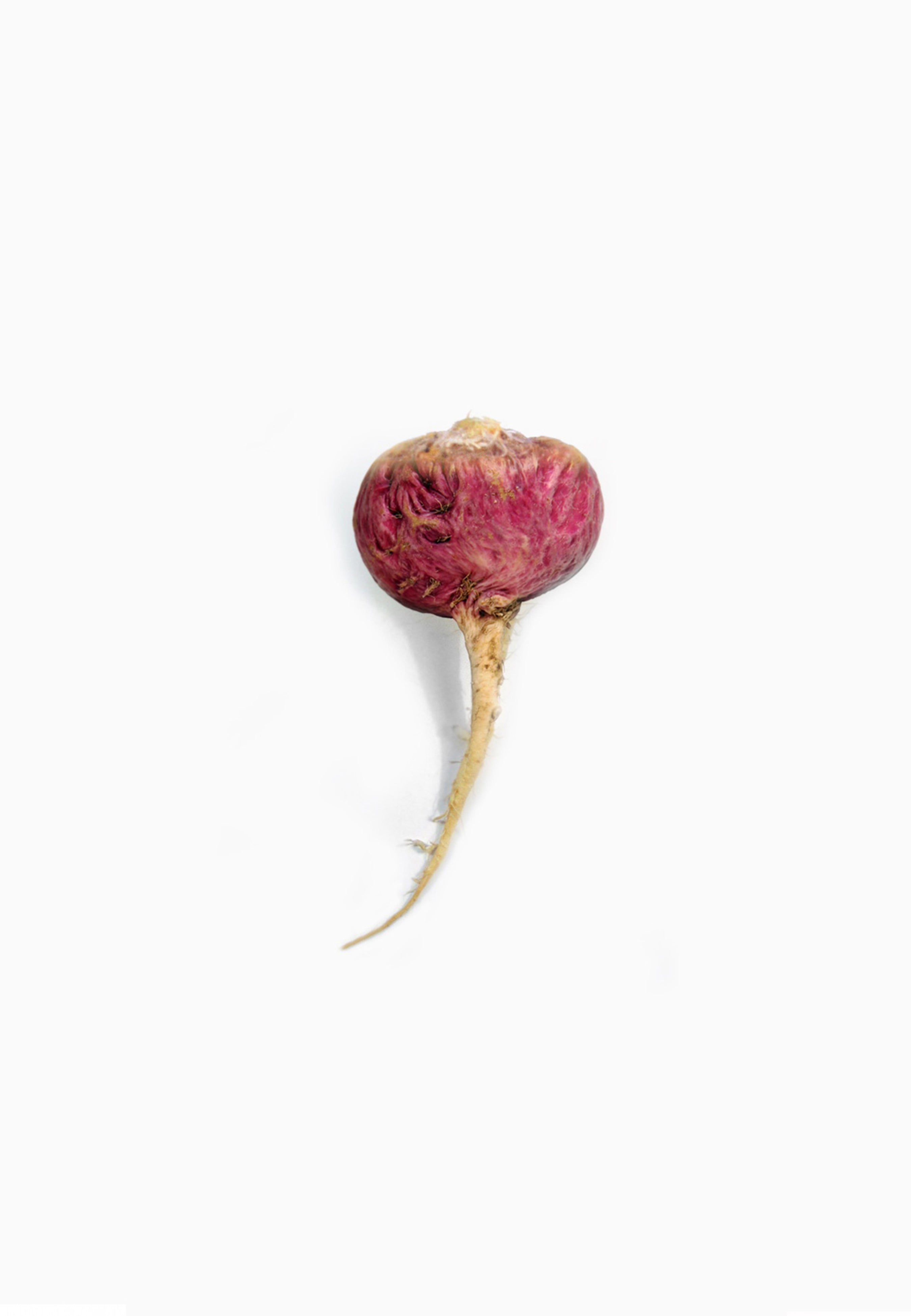Red Maca Root