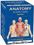 Anatomy (Quickstudy (Flash Cards))