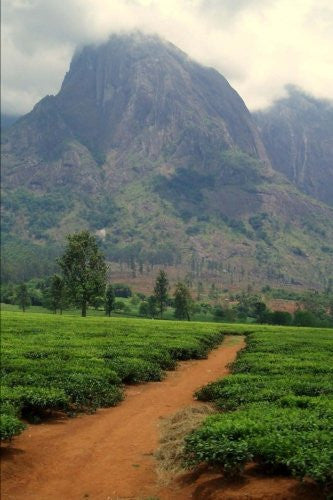 Tea Estate in Malawi Journal: 150 page lined notebook/diary