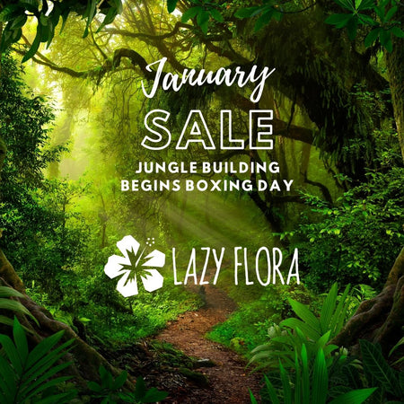 January sale starts Boxing Day
