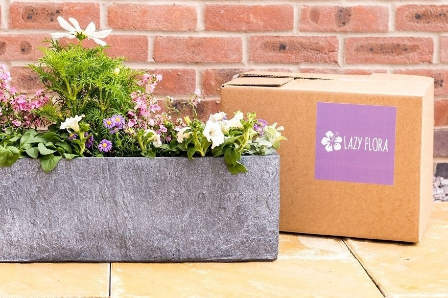 Introducing Lazy Flora subscriptions