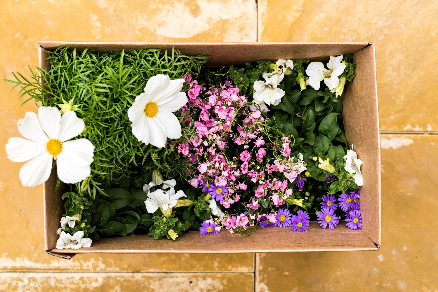 Lazy Flora garden in a box