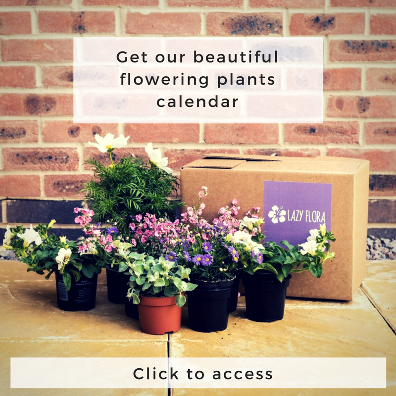 Lazy Flora Flowering Plants Calendar opt-in link