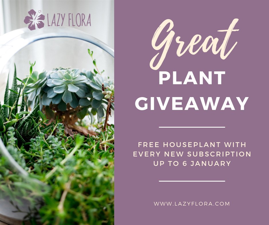 Lazy Flora Great Plant Giveaway