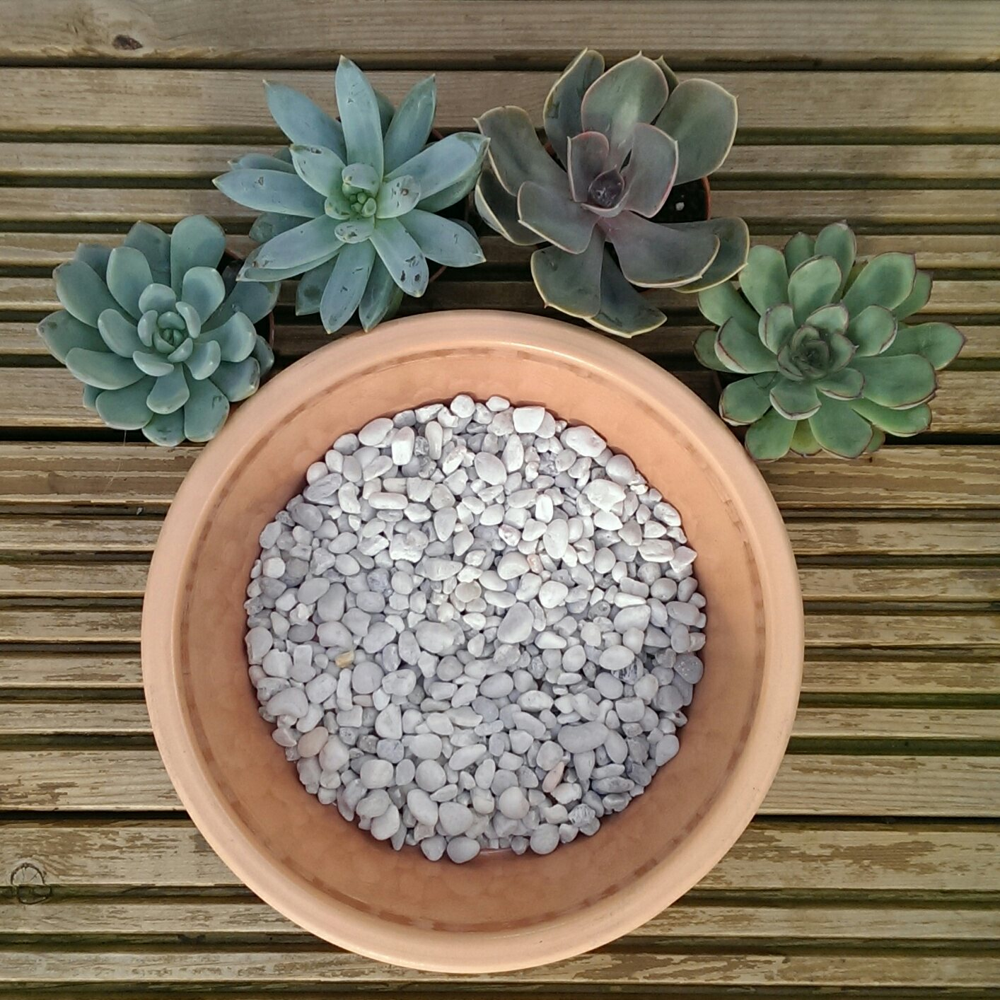 Lazy Flora guide to planting up succulents
