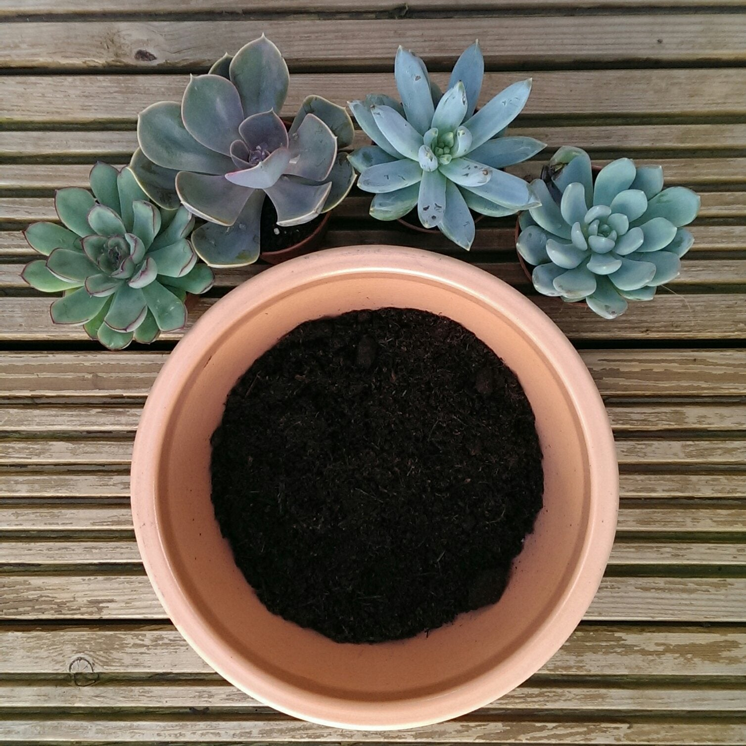 Lazy Flora succulent planting up guide