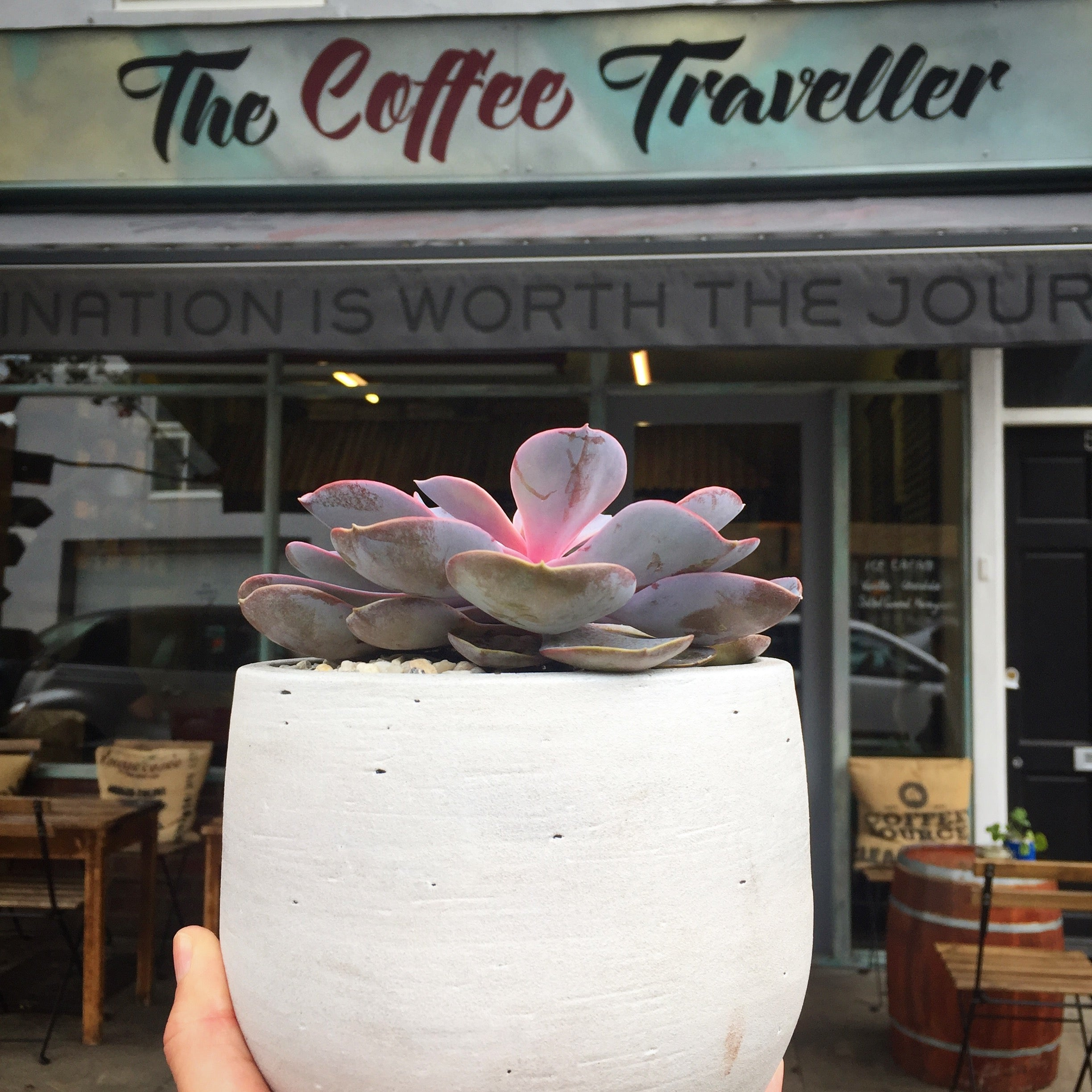 The Coffee Traveller and Lazy Flora collaboration