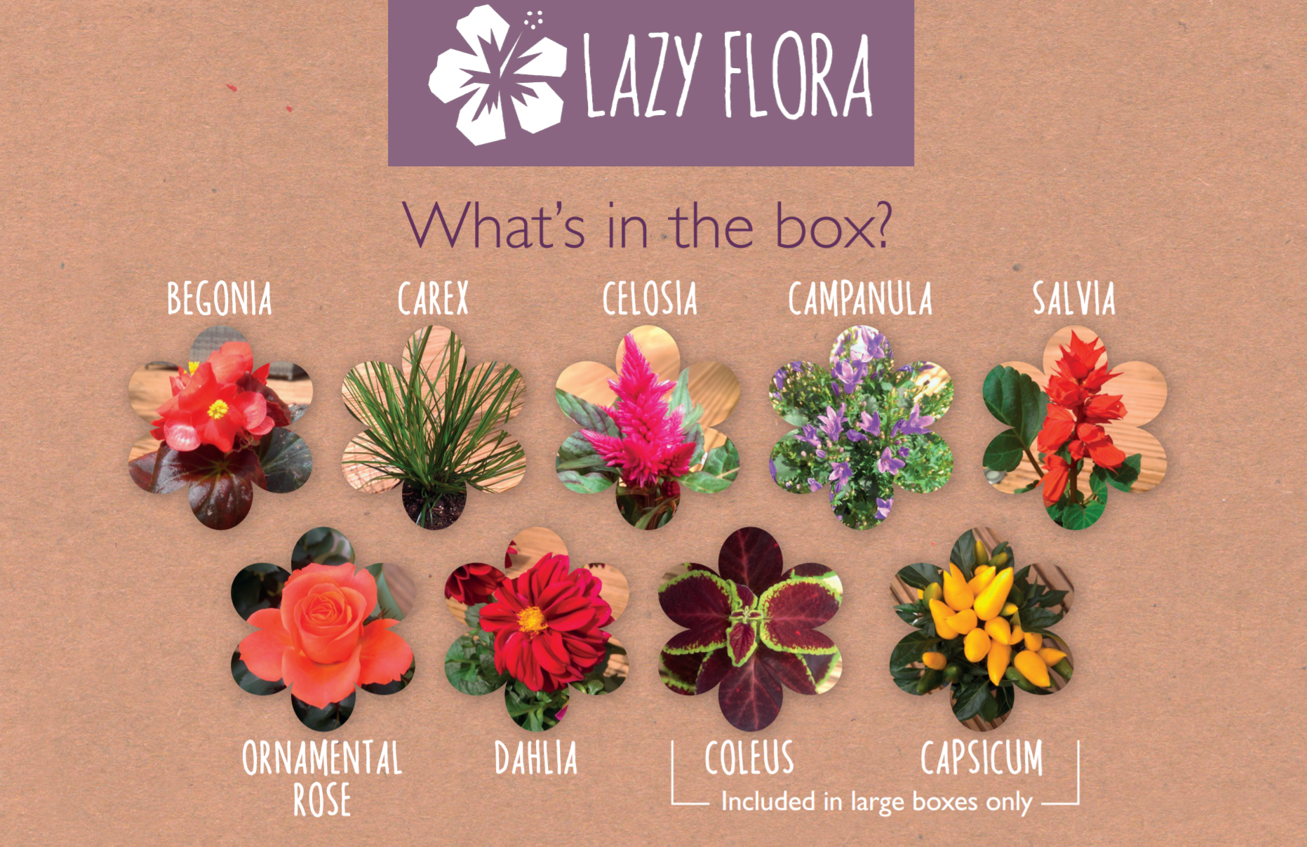 Lazy Flora Indian Summer plant collections contents