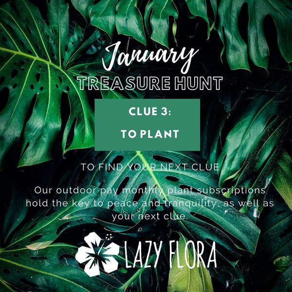 Lazy Flora treasure hunt clue 3