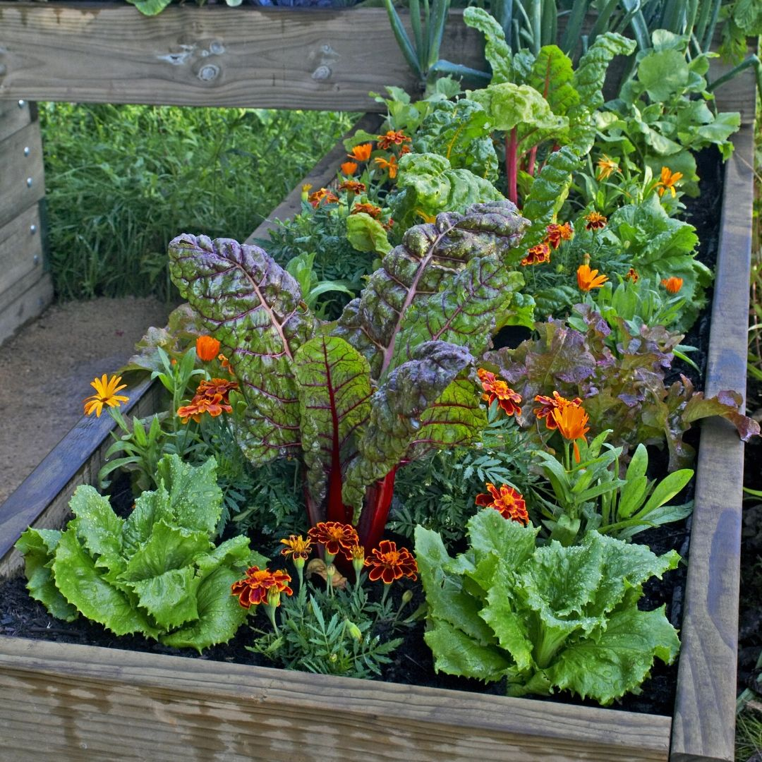 Lazy Flora fruit, veg and herb boxes