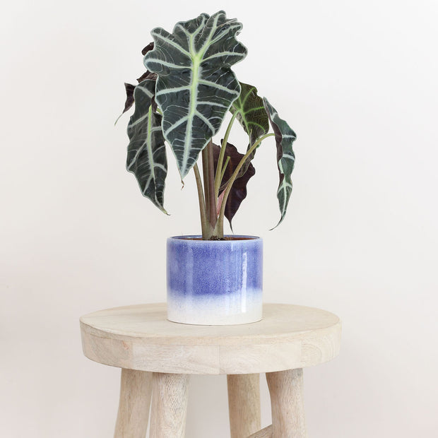 Indoor plant subscription pre-pay