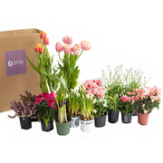 Seasonal outdoor plant subscription, pre-pay