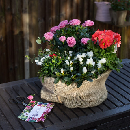 Mother's Day Outdoor Plant Bundle