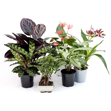 Indoor plant subscription pre-pay INSANE Summer offer
