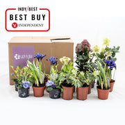 Seasonal outdoor plant subscription, pay monthly: mild, sunny