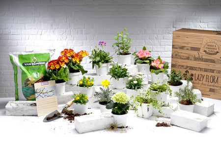 Seasonal outdoor plant subscription, free gloves