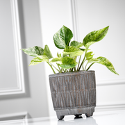 Indoor plant subscription pay monthly
