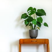 Indoor plant subscription pay monthly (with new luxury option)
