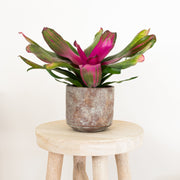 Your personalised indoor plant delivery