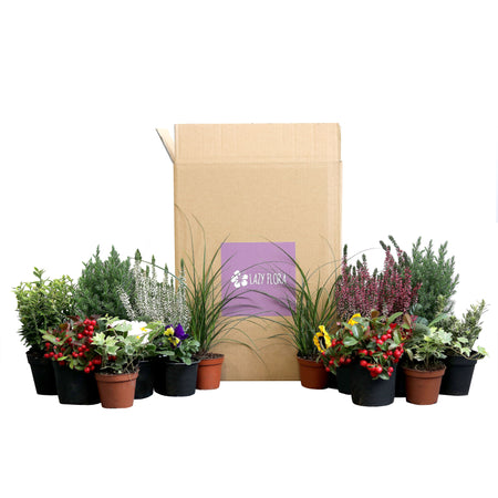 Seasonal outdoor plant subscription, pay monthly