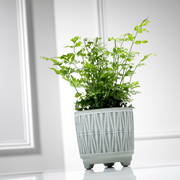 Indoor plant subscription 12 month pre-pay