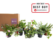 Seasonal outdoor plant subscription, pay monthly: mild, shady