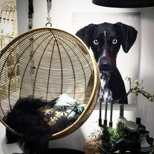 hanging ball chair and wall decor of dog on wall behind it