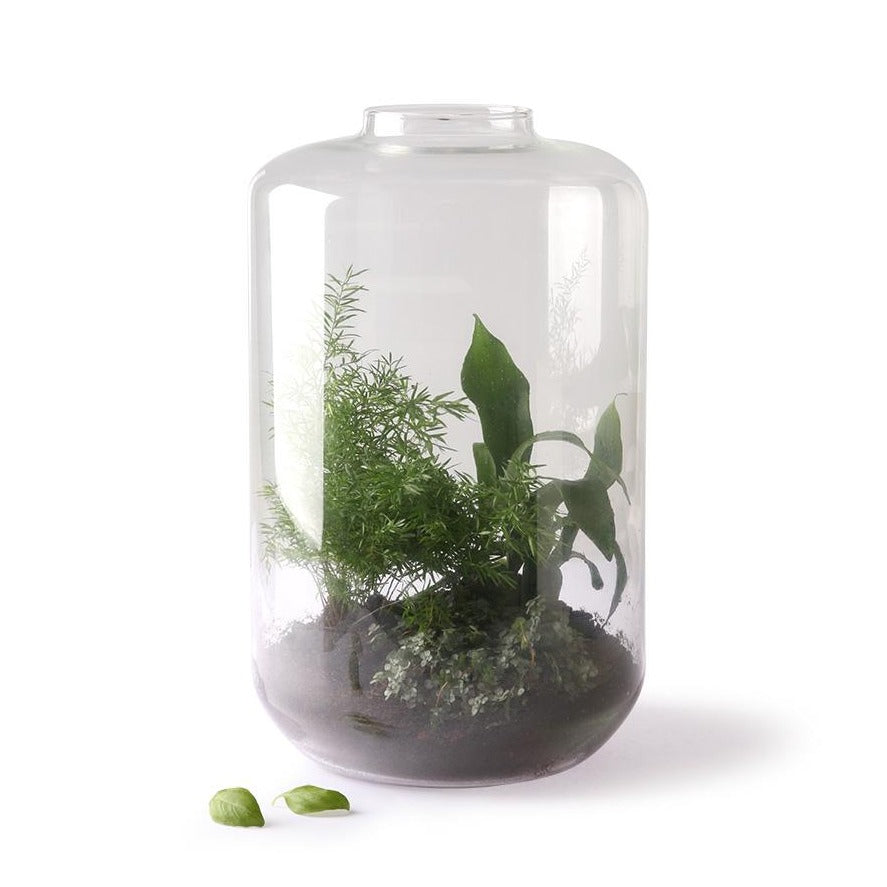 giant glass vase with a mini garden inside
