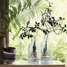 medium and large glass vase with branches