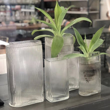 two sets of glass ribbed vases with green plants in it