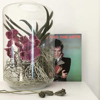 vinyl record and giant glass vase