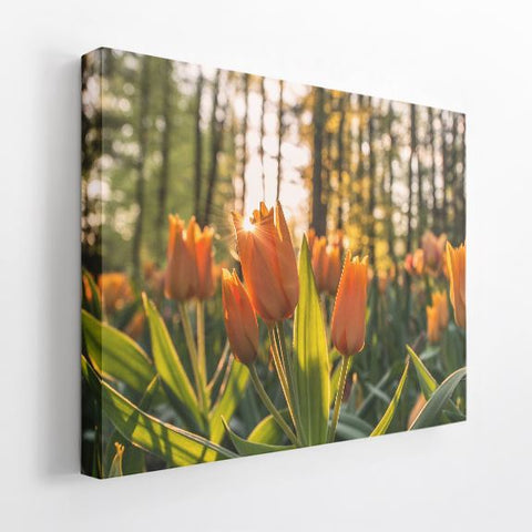 "Acoustic Art | 1.5"" Acoustic Art Panel, Nature A"