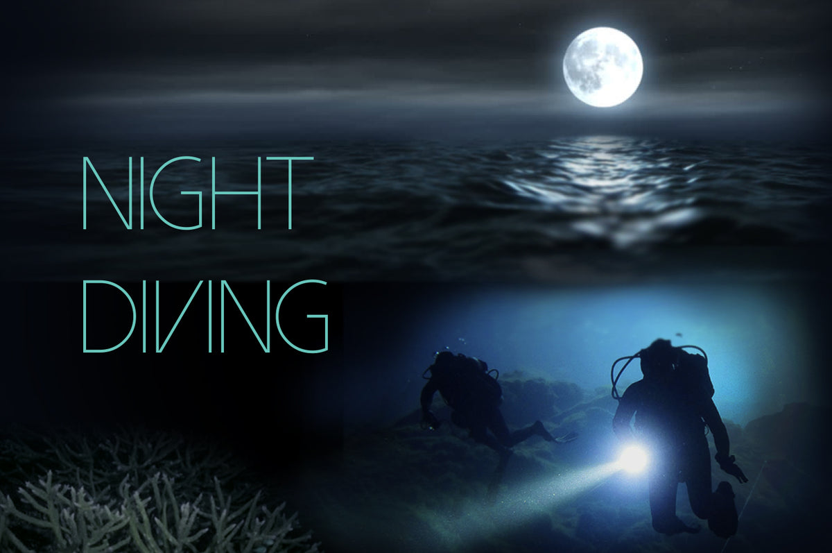Ultimate Guide to Night Diving – Underwater Kinetics -Dive