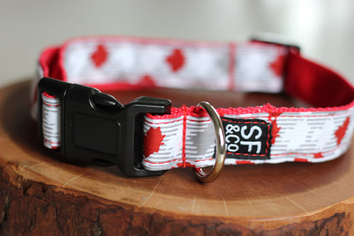 Canada Collar (only available in S)