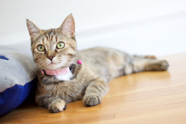 Baby Pink Collar