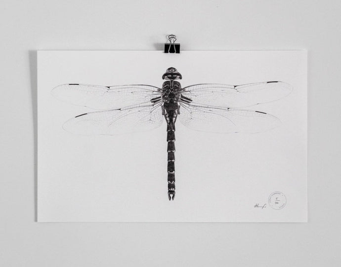 Sarah Hammond - Dragonfly Limited Edition Print